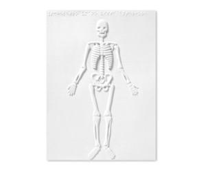 Il corpo umano: apparati