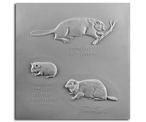 Il castoro, la marmotta e la cavia
