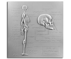 Scheletro dell'uomo, scheletro del capo