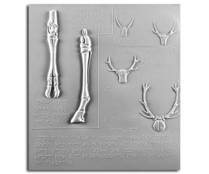 Scheletro del piede di bue, scheletro del piede di cavallo, corna di cervo