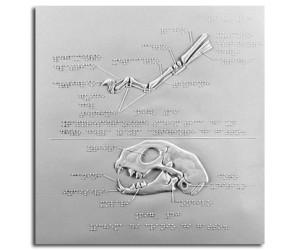 Scheletro di dita di gatto e cranio di gatto