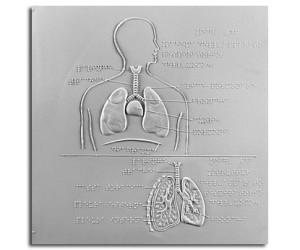 Schema e struttura dell'apparato respiratorio dell'uomo