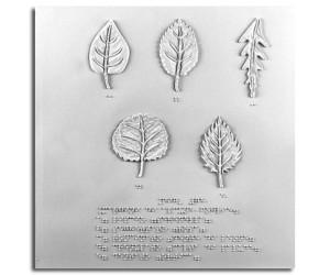 Margini di alcune foglie