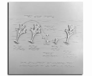 Schema riassuntivo della riproduzione di un'alga: il focus