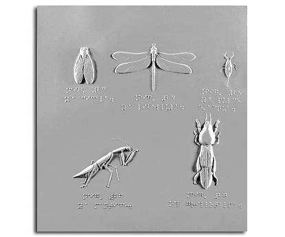 La cicala, la libellula, la pulce d'acqua, la mantide e il grillotalpa