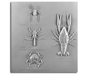 L'epeira, lo scorpione giallo, il granchio e il gambero