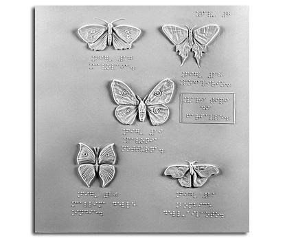 Vari tipi di farfalle: Cavolaia, Podalirio, Pavonaia notturna, Callima delle Indie e Bombice dell'ailanto