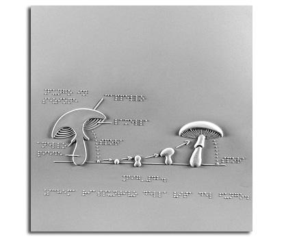 Schema riassuntivo della vita di un fungo