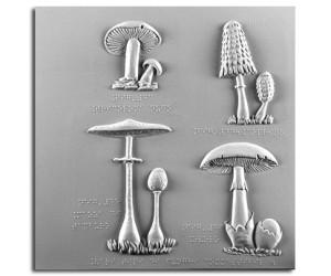 Triacoloma nudo, coprino, mazza di tamburo ed ovulo (funghi commestibili)