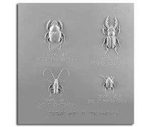 Lo scarabeo sacro (coleottero), il cervo volante, lo scarabeo
